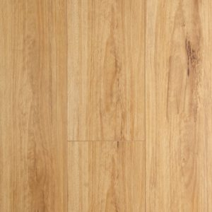 Blackbutt-500x458